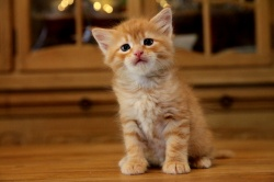 new-pictures-of-all-kittens.jpg