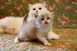 new-pictures-of-kittens.jpg