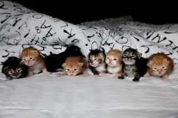 new-verona-and-grey`s-kittens-o2.jpg